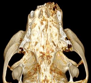 Reconstrucion 3D, vue ventrale, mandibule retirée