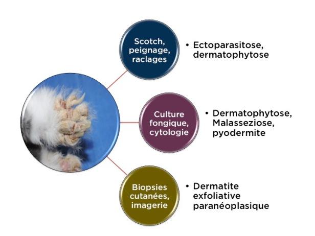 Pellicules lapin diagnostic