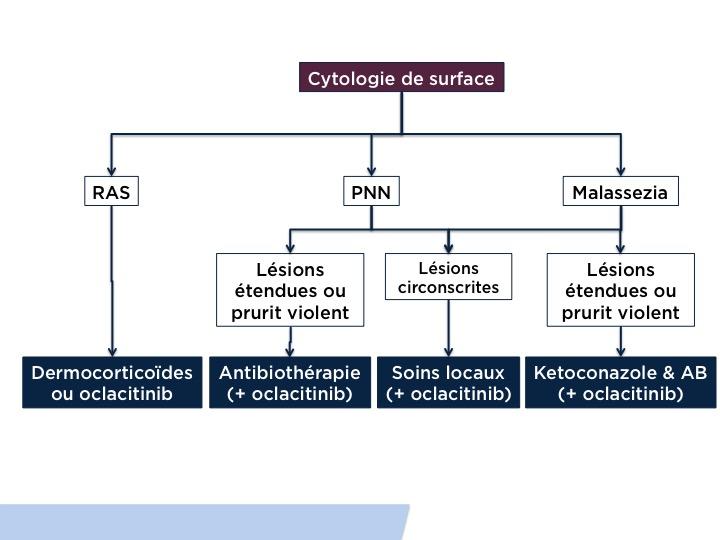 Algorthime dermatite atopique poussée